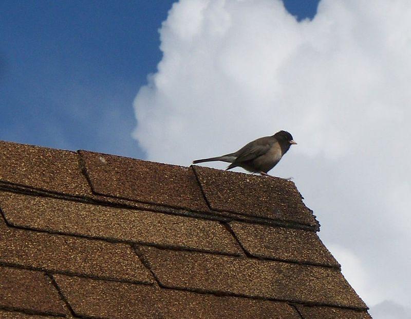 bitumenes zsindely tető